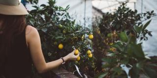 The 5 top specialties of Menton