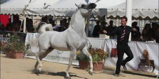 Menton : Arabian  Horse World Championships, 2018